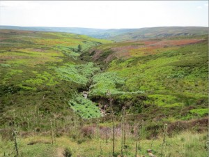 Tweed coloured moors